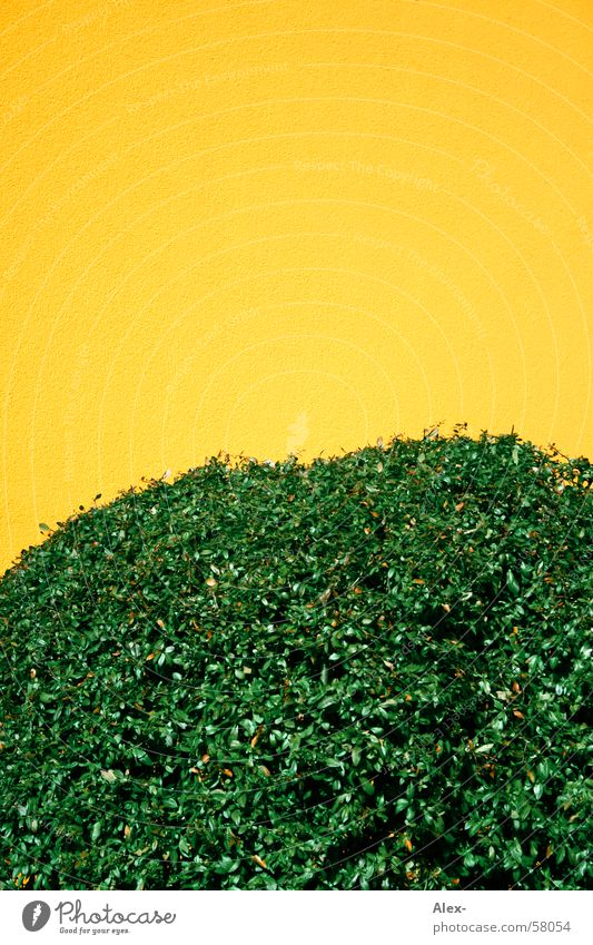 Nature Green Leaf Yellow Wall (building) Flat (apartment) Bushes Branch Plaster Hedge