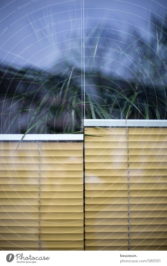 You split it in two. Interior design Decoration Plant Foliage plant Pot plant Exotic Palm tree Facade Window Venetian blinds Screening Weather protection Glass