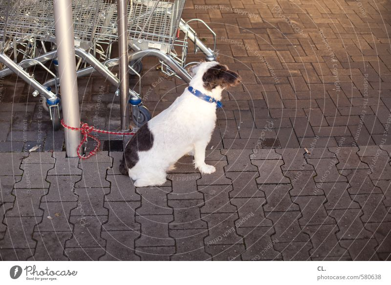 ut pascha | now a sausage. Shopping Animal Pet Dog 1 Wait Anticipation Love of animals Watchfulness Patient Curiosity Supermarket Shopping Trolley
