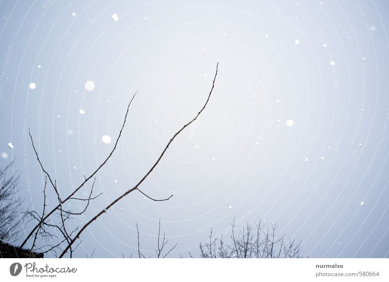 Nature Plant Relaxation Winter Cold Environment Sadness Snow Art Moody Snowfall Dream Park Glittering Living or residing Ice