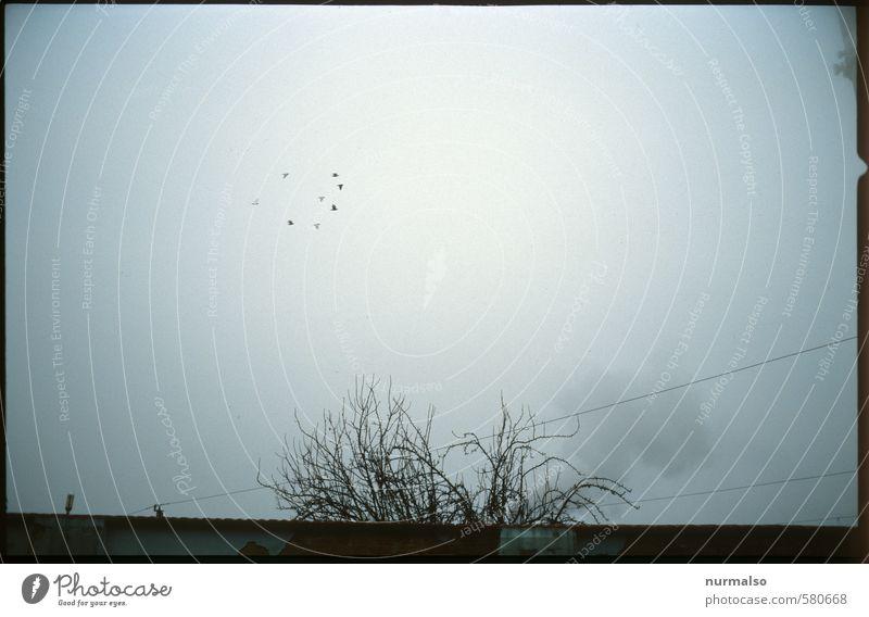 Sky Nature Dark Environment Sadness Autumn Art Moody Bird Flying Fog Gloomy Climate Creepy Discover Trashy