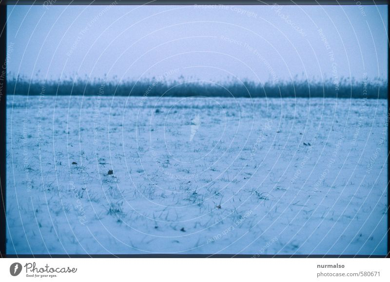 sad horizon Hunting Winter Snow Winter vacation Hiking Art Nature Landscape Horizon Bad weather Ice Frost Snowfall Grass Meadow Observe Relaxation Freeze Dark