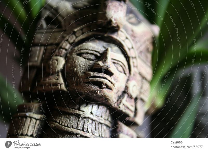 Art Culture Virgin forest Statue Doomed Forget Go under Mexico Archeology Maya Excavation Inca Indiana