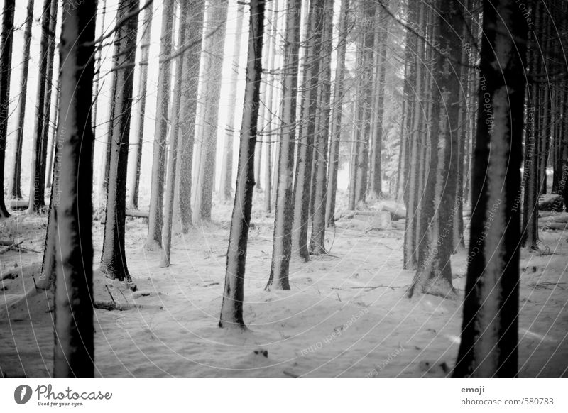 white on black Environment Nature Landscape Winter Bad weather Snow Tree Forest Threat Dark Creepy Cold Black White Black & white photo Exterior shot Deserted