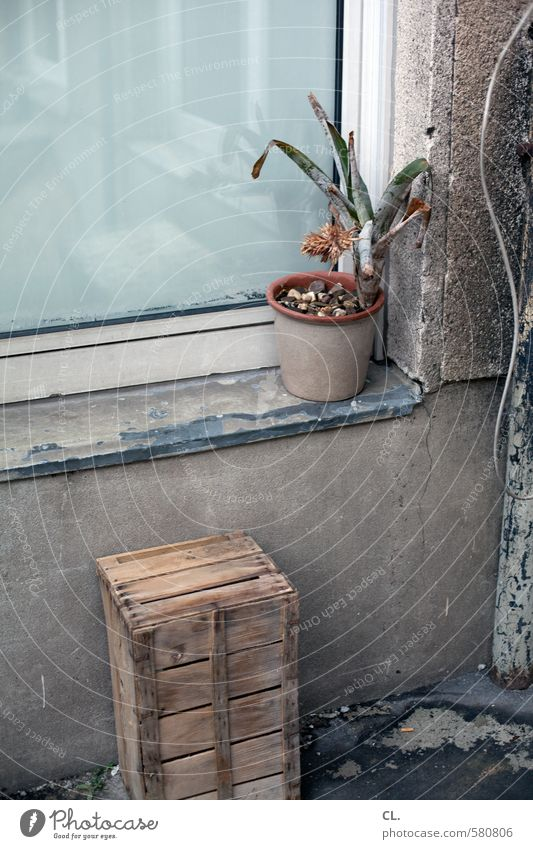 Old Plant Flower House (Residential Structure) Window Wall (building) Wall (barrier) Gray Dirty Gloomy Broken Decline Wanderlust Cigarette Crate Stagnating