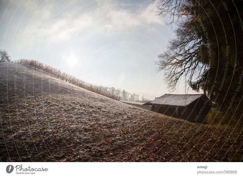 slope Environment Nature Landscape Autumn Winter Fog Ice Frost Meadow Field Cold Natural Slope Hill Colour photo Subdued colour Exterior shot Deserted Day