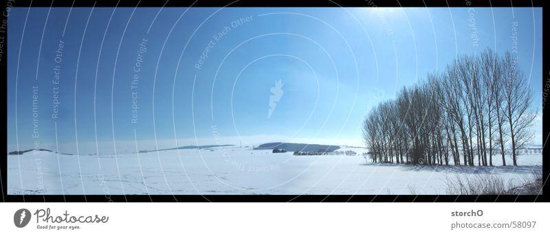 Beautiful Tree Sun Blue Snow Large Panorama (Format) Thuringia