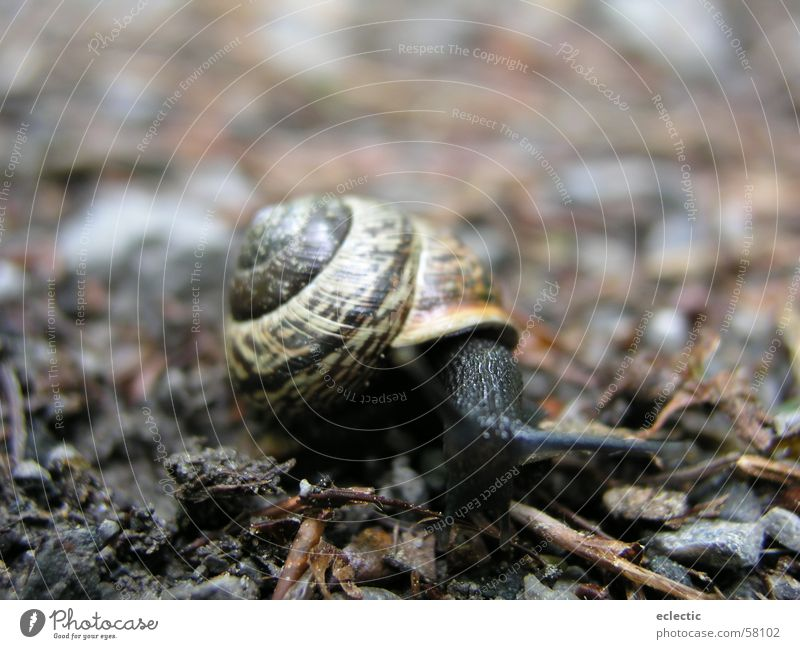 Carl Lewis 2 Snail shell Animal Woodground Feeler Reptiles Slowly Crawl Exterior shot Depth of field Floor covering Nature Macro (Extreme close-up) Close-up