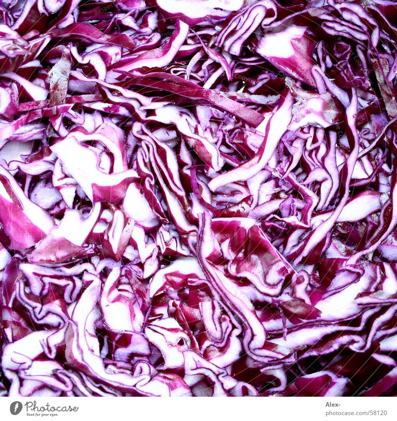 Red Nutrition Healthy Food Violet Anger GDR Vitamin Lettuce Cabbage