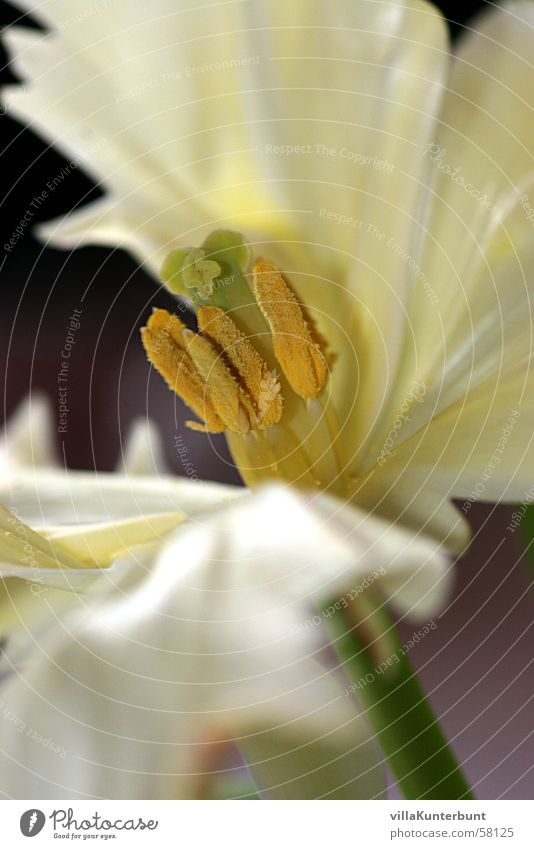 Nature Flower Pollen Pistil Blossom leave