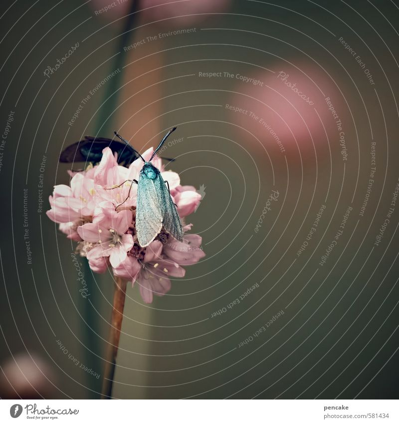 under the sign of the ram Nature Plant Animal Summer Flower Meadow Butterfly Wing Sign Esthetic Exotic Crazy Beautiful Pink Turquoise Burnet Universe Sphere