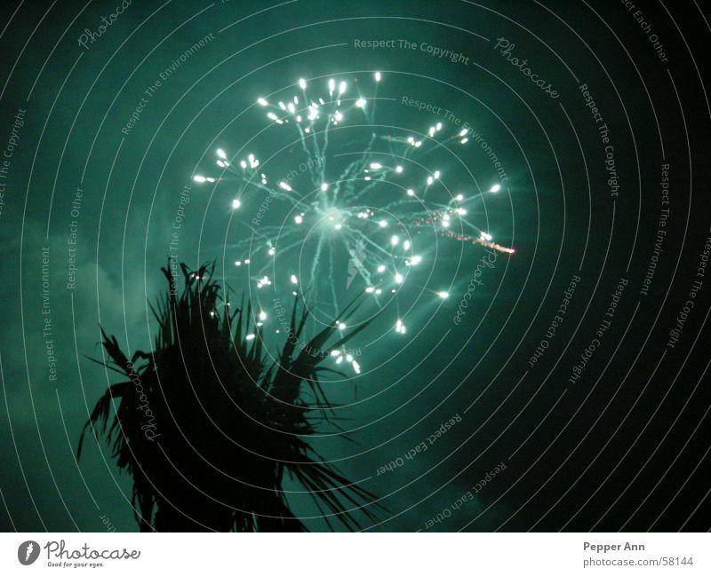 mallorca under fire Palm tree Light Dark Firecracker