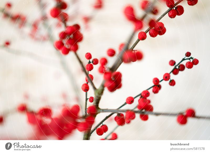 Ilex branches Design Living or residing Flat (apartment) Arrange Interior design Decoration Room Living room Kitchen Bathroom Plant Bushes Esthetic Beautiful