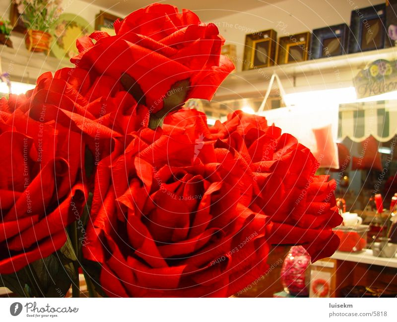 red rose Things flower