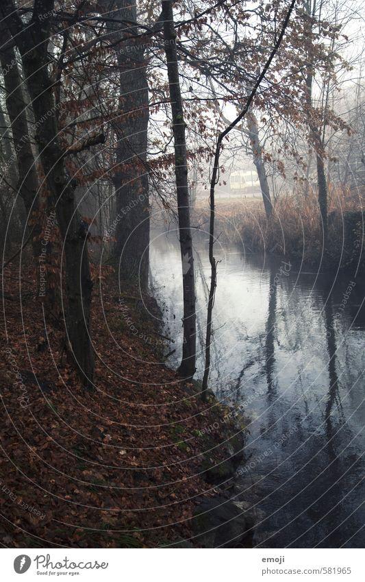 Nature Plant Tree Landscape Dark Environment Autumn Natural Fog Creepy Brook Bad weather