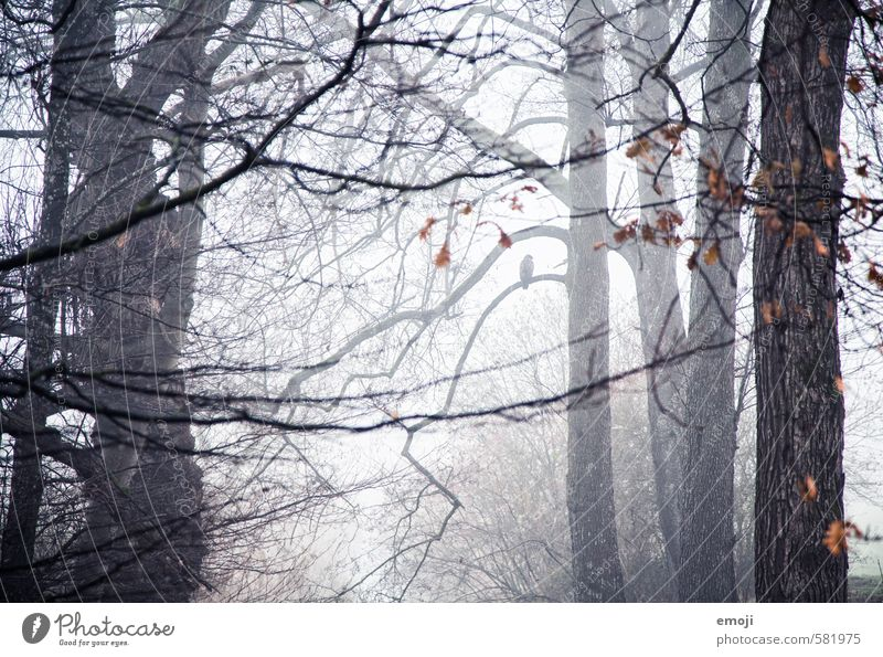 solitary Environment Nature Landscape Autumn Bad weather Storm Fog Plant Tree Forest Threat Dark Cold Branch Creepy Colour photo Subdued colour Exterior shot