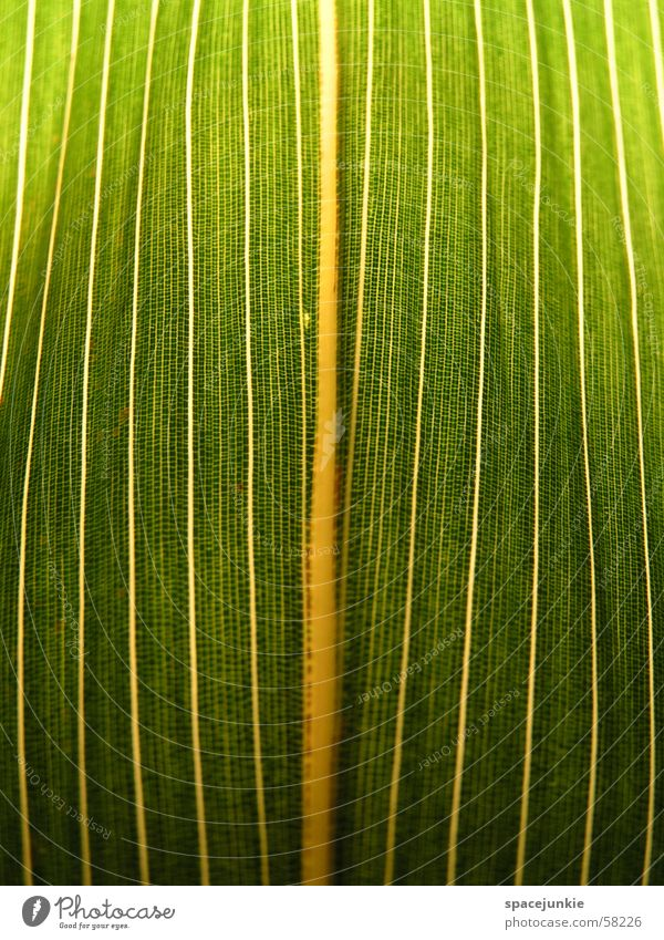 leaf structure Leaf Green Yellow White Rachis Macro (Extreme close-up) Bamboo stick Prison cell