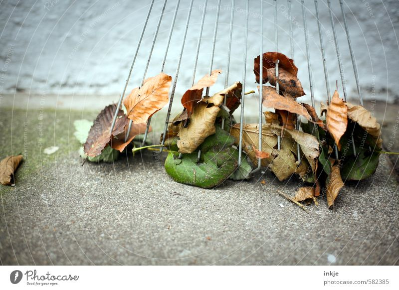 autumn foliage remnants Gardening Autumn Leaf Autumn leaves Clean Emotions Diligent Orderliness Effort Rake Sweep Colour photo Multicoloured Exterior shot