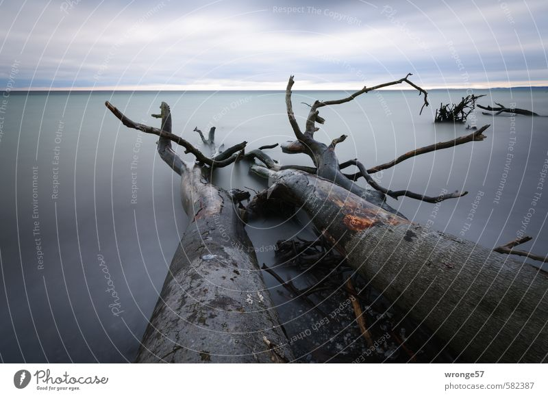 Falling Giants Nature Landscape Plant Water Sky Clouds Horizon Autumn Tree Coast Baltic Sea Blue Gray Surface of water Clouds in the sky Cloud cover Tree trunk