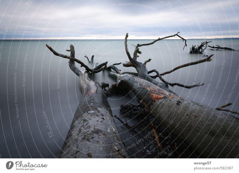 Sky Nature Blue Water Plant Tree Landscape Calm Clouds Autumn Death Coast Gray Lake Baltic Sea Tree trunk