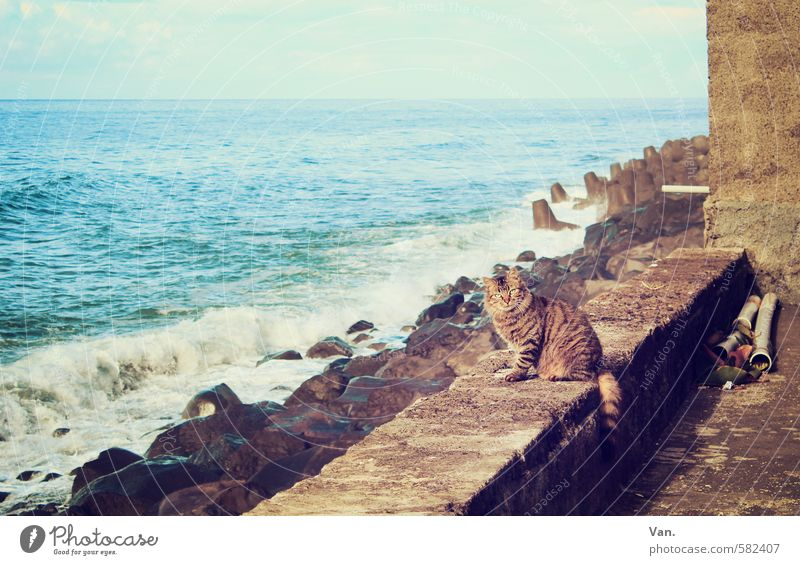 guenon Landscape Sky Clouds Beautiful weather Rock Waves Coast Ocean Wall (barrier) Wall (building) Animal Pet Cat 1 Observe Curiosity Blue Colour photo