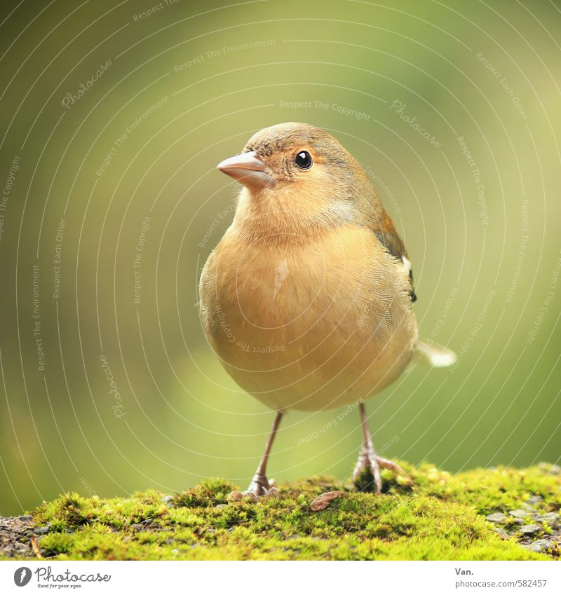 Nature Green Plant Animal Yellow Autumn Small Bird Wild animal Curiosity Moss Chaffinch
