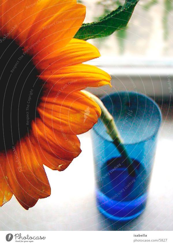 sunflower Flower Sunflower Nature