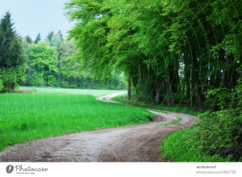 Nature Vacation & Travel Green Summer Tree Relaxation Landscape Leaf Forest Environment Emotions Movement Lanes & trails Wood Leisure and hobbies Idyll