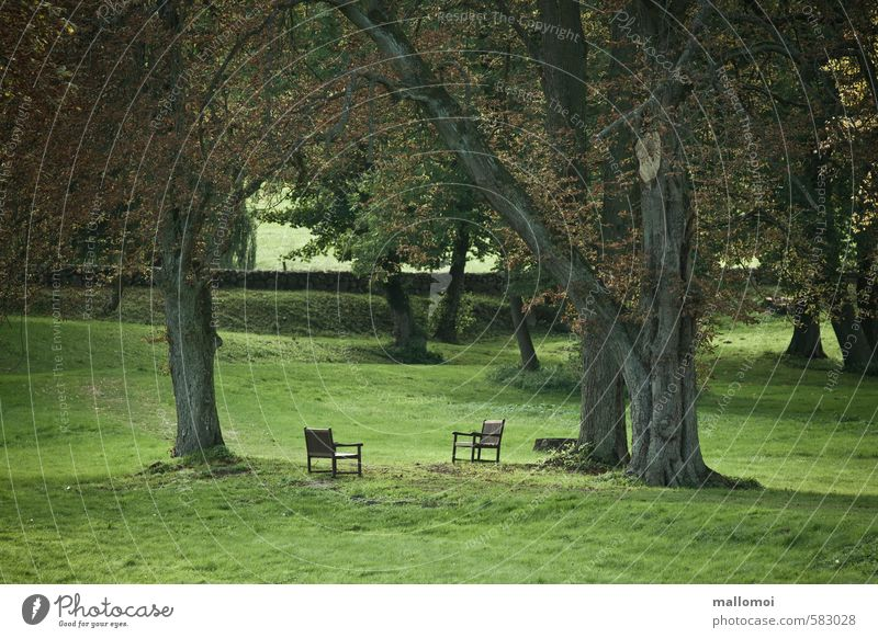 Two chairs face each other in a park Chair Environment Nature Landscape Plant Climate Climate change Tree Garden Park Meadow Patient Calm Hope Sadness