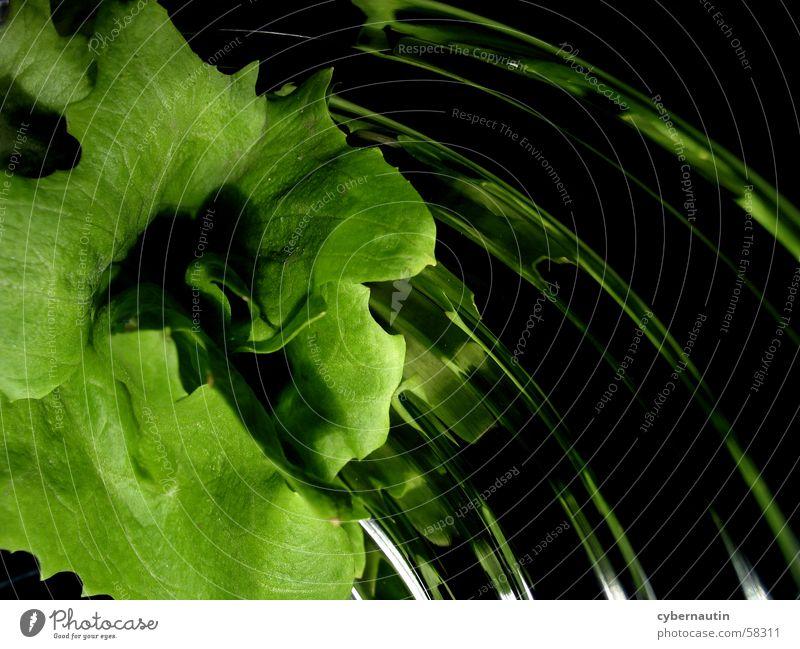 Salad 1 Leaf Reflection Kitchen Green Lettuce Sand Metal Bowl
