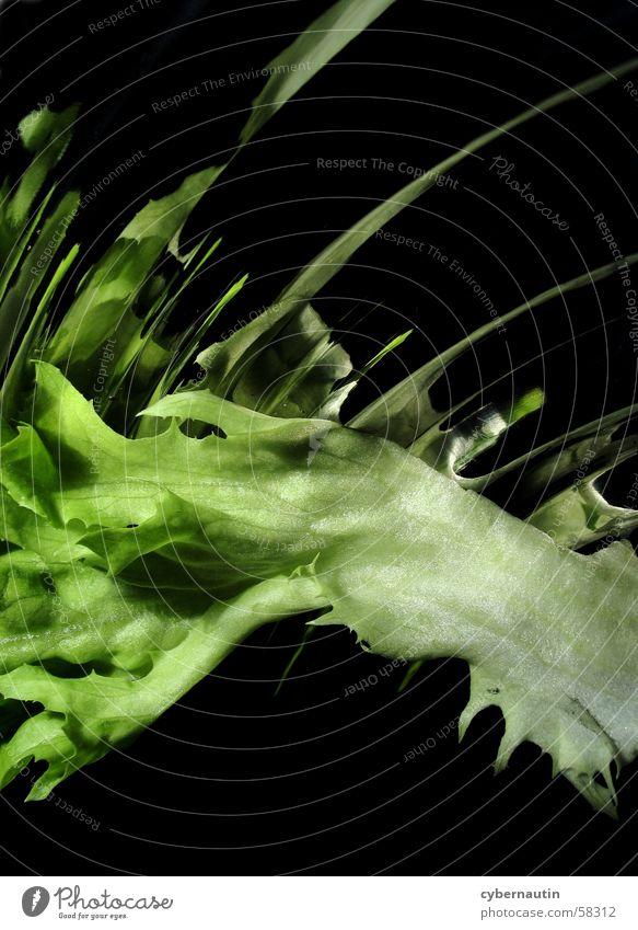 Salad 2 Leaf Stalk Reflection Kitchen Green Lettuce Metal Bowl
