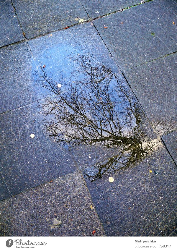 Tree Rain Sidewalk Puddle Slate blue