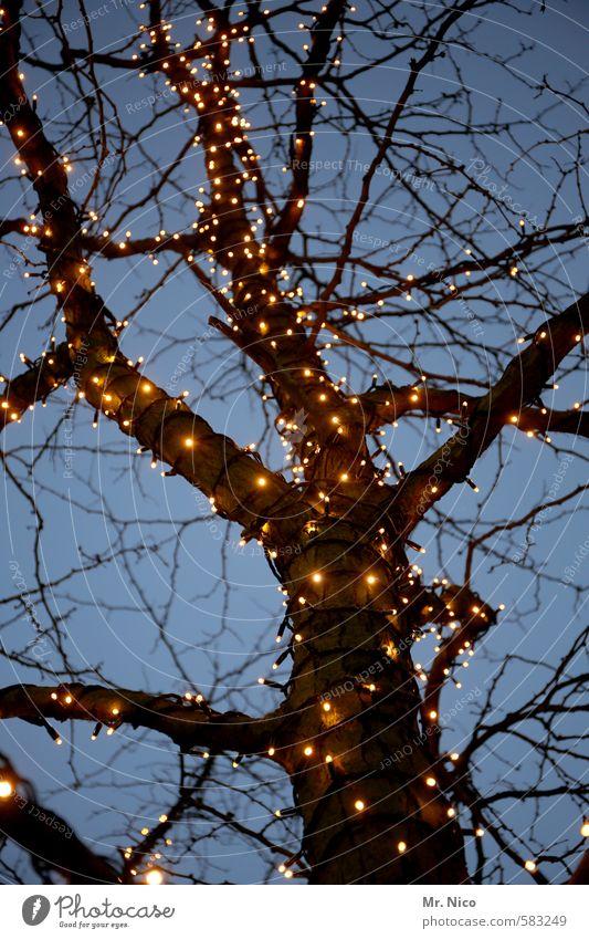 Blue Christmas & Advent Tree Winter Cold Autumn Lighting Feasts & Celebrations Moody Decoration Branch Romance Kitsch Tree trunk Branchage Christmas decoration