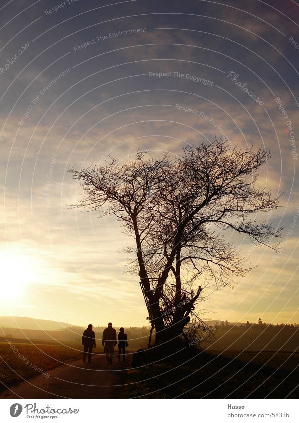 Human being Tree Sun Blue Winter Clouds Yellow Far-off places Cold Autumn Death Field Gloomy Vantage point To go for a walk Dry