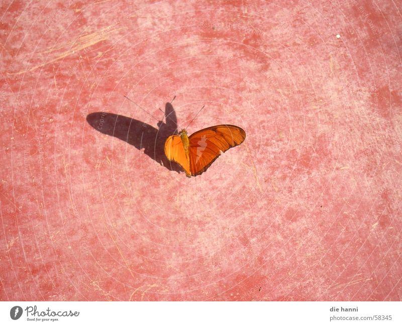 butterfly Butterfly Summer Pink Shadow Orange