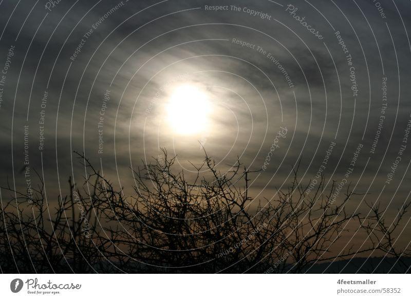 Sunny Eyes Open Bushes Clouds Dark Fog Light Shadow Blue Bread Node
