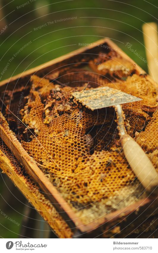 Nature Environment Healthy Food Health care To enjoy Nutrition Organic produce Tradition Livestock breeding Gardening Production Honey-comb Wax Honeycomb