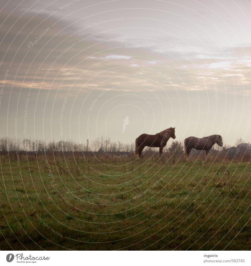 Sky Nature Blue Green Plant Landscape Calm Clouds Animal Winter Far-off places Meadow Autumn Grass Gray Horizon