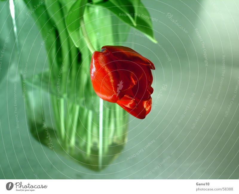 Bent Tulip Vase Green Red Spring