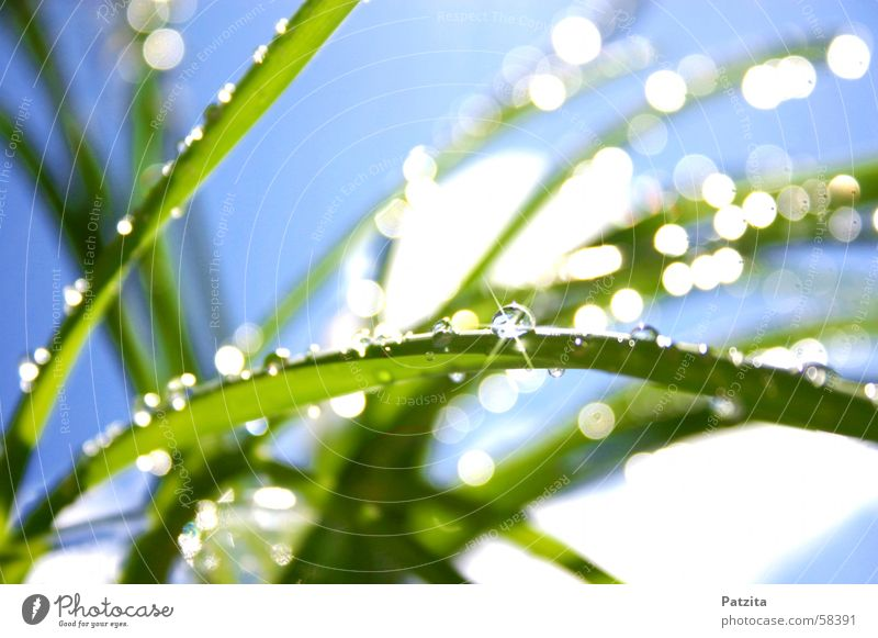 Water Sky White Green Blue Summer Meadow Grass Spring Glittering Drops of water Rope Dew