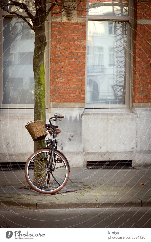 affection Lifestyle Bicycle Tree Facade Window Cycling Sidewalk Street Touch Wait Authentic Positive Town Sympathy Mobility Nostalgia Basket Colour photo