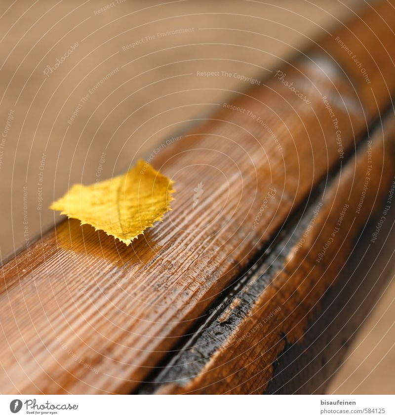 Nature Tree Leaf Yellow Brown Gold Wet Autumn leaves Autumnal Rod