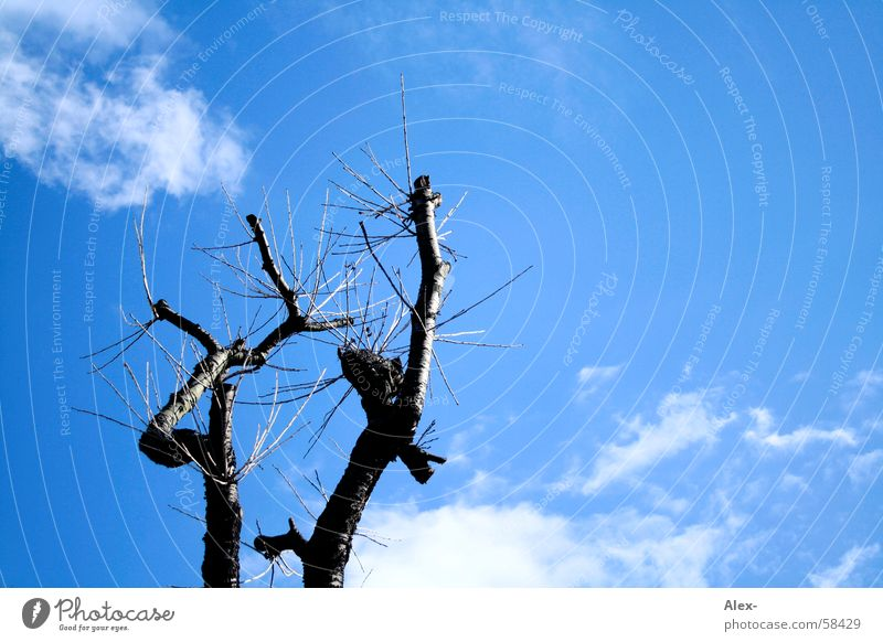 Nature Old Sky Tree Plant Clouds Life Death Air Earth Growth Branch Tree trunk Tree bark Annihilate Destroy