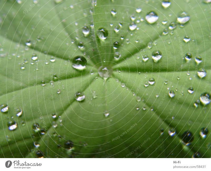 Nature Water Leaf Wet Drops of water Bushes Palm tree Damp