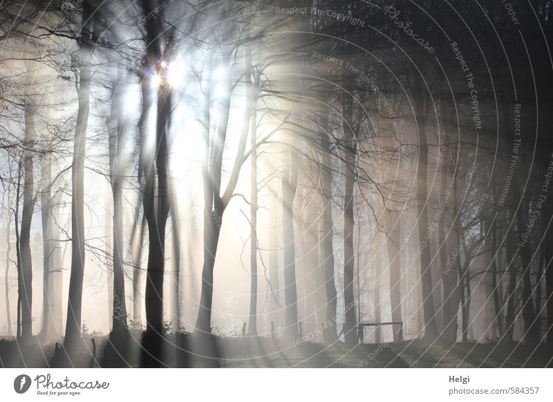 Sunrays break through the morning fog at the edge of the forest Environment Nature Landscape Plant Winter Beautiful weather Ice Frost Tree Forest Freeze