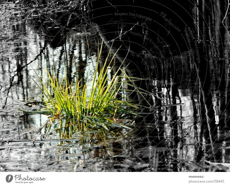 ...when hope grows Grass Hope Light Water Deluge Contrast