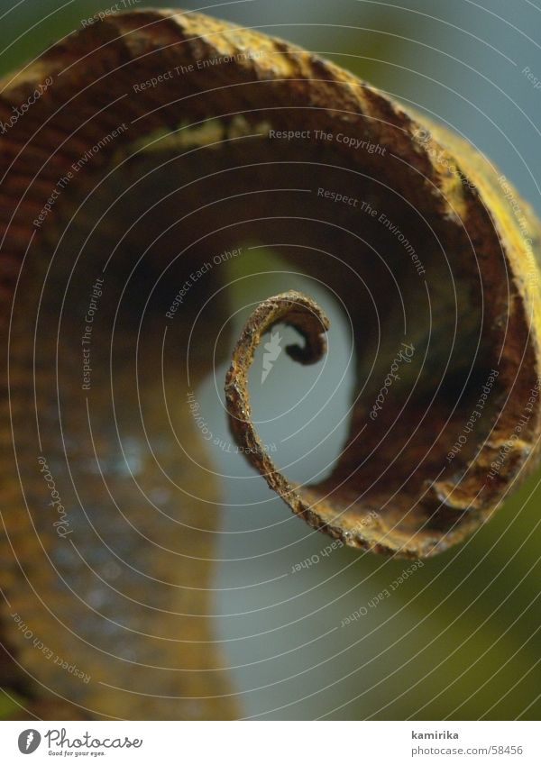 Nature Flower Plant Brown Metal Railroad tracks Rust Iron Spiral Planer