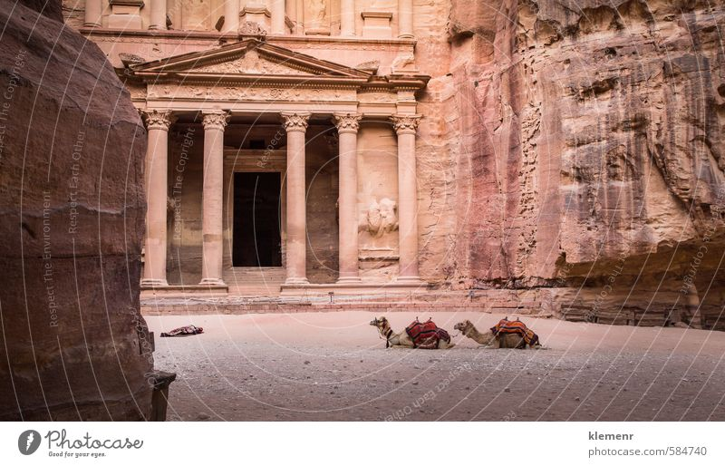 Petra, Jordan Beautiful Vacation & Travel Tourism Art Culture Rock Town Ruin Building Architecture Facade Stone Old Historic Yellow Pink Red Society camel
