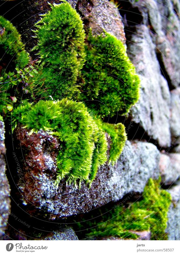 Green Plant Stone Wall (barrier) Moss Wall moss Stone wall
