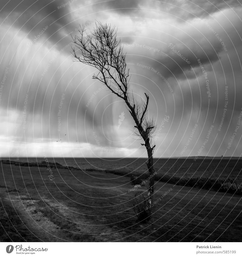 Nature Water Plant Tree Loneliness Landscape Clouds Dark Environment Autumn Coast Gray Air Weather Rain Waves